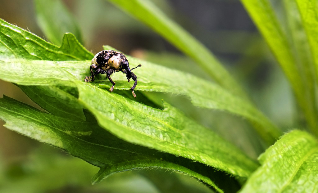 Getting back to nature, and testing macro photography.