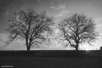 A couple of trees in Burgundy sunset